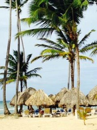 dreams punta cana swim out room reviews