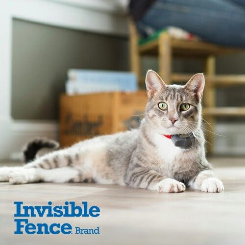 invisible fence for cats reviews