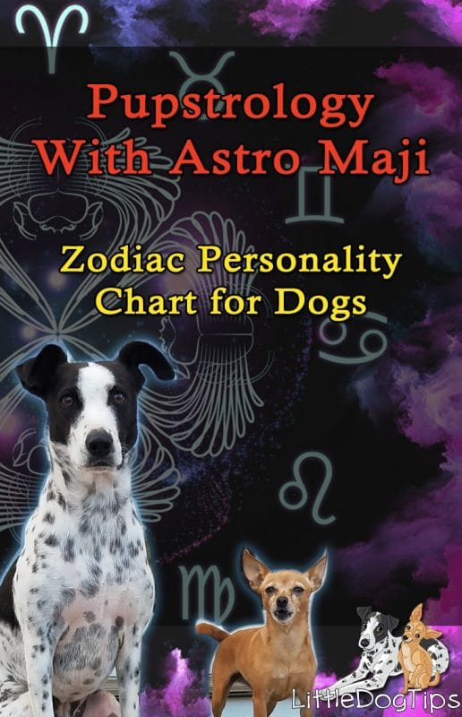 zodiac powerspot for dogs review