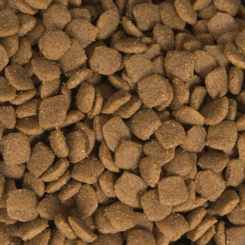 fromm large breed dog food reviews