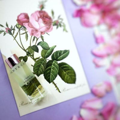 chantecaille rose de mai oil review