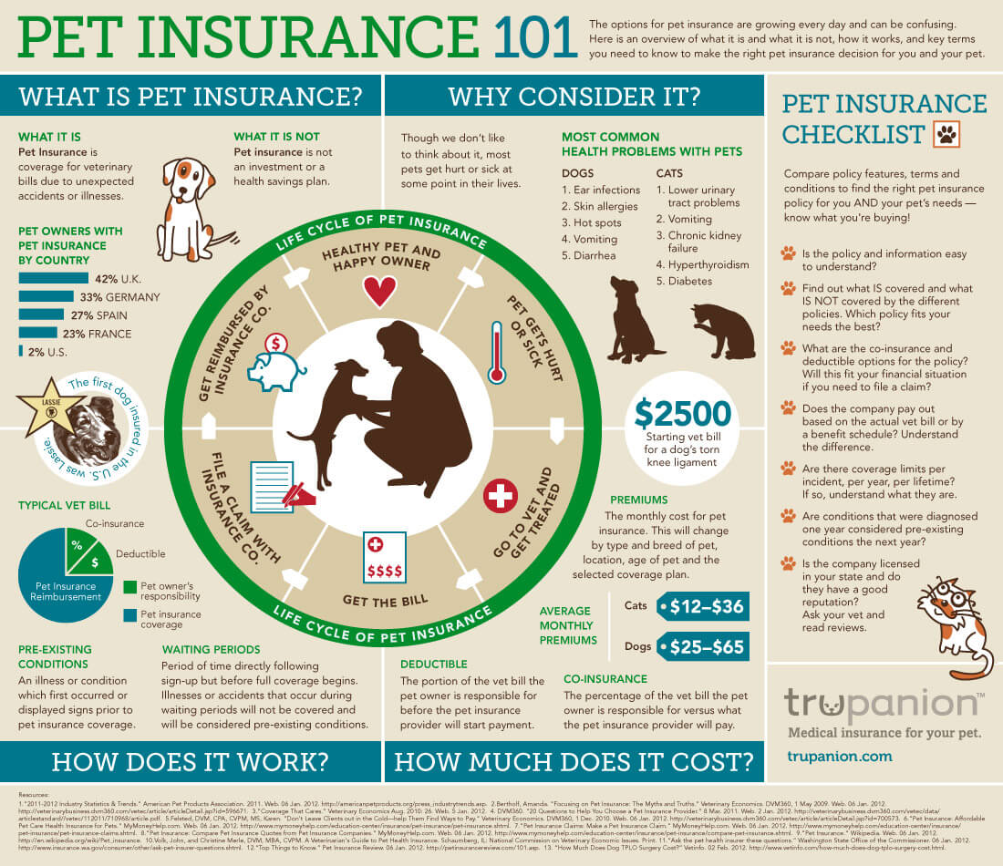 dog insurance reviews consumer reports