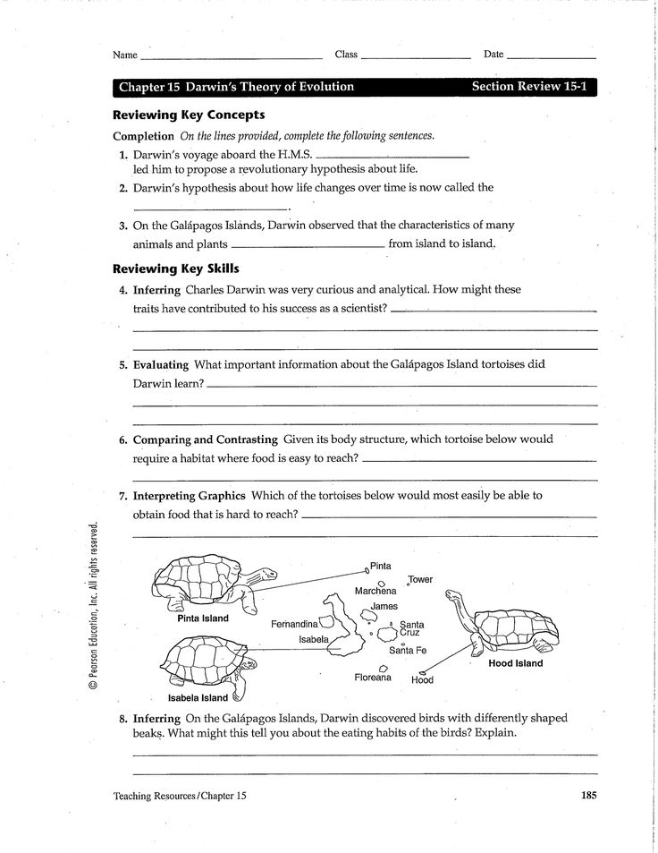 evidence for evolution review worksheet