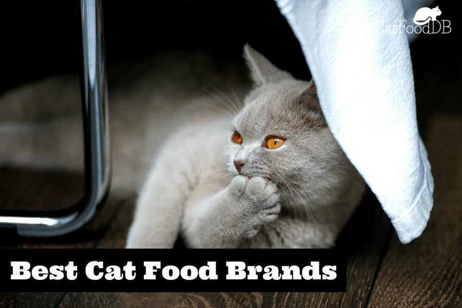 grand cru cat food review